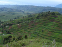 Hills and cultivation