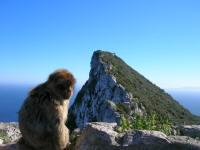 A monkey at the second highest point looking at the highest point.