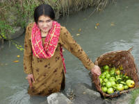 Young girl collecting apples that fell into the canal