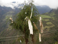 Prayer flags on a tree