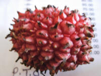 Local litchi - very sour