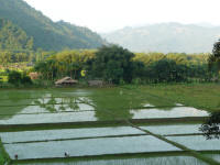 Reflections on the rice paddies (Jay)