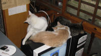 Cats on the PC