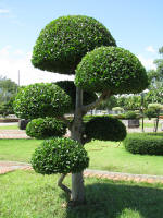 scuptured trees - as they are expected to look in paradise.