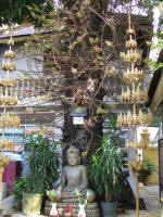 Statue of Buddha under a Shorea Robusta Roxb. The fruit is below the branches and leaves