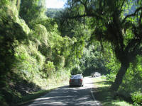 Trees and narrow roads