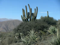 Typical plants, cactus, shrubs, aloes