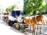 Carriages to ride in