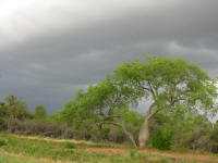 Threatening clouds over the Chaco