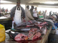 The fish market