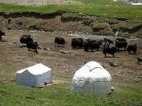 Yurts and Yaks (most people had herds of cattle)