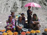 Apricot sellers by the roadside