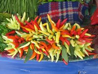 colourful chillies